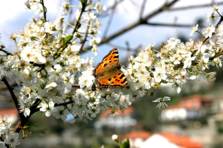 Butterfly-branches-flowers-and-sky-1401674-1599x1066