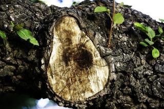 Tree-detail-1616273